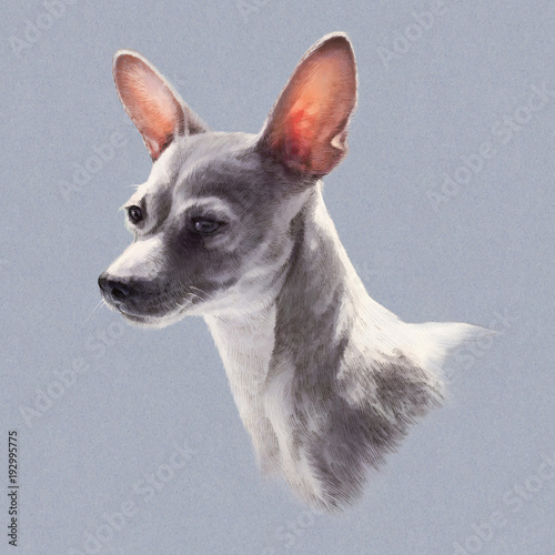 Illustration Of Toy Fox Terrier Isolated On Gray Background Dog Is Man S Best Friend Animal Collection Dogs Hand Painted Illustration Of Pets Art For Card Cover Banner T Shirt Buy This Stock