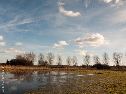 row of trees edge of farm field grass plain horizon blue sky with clouds nature landscape waterlogged