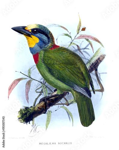 Illustration of bird Wallpaper Mural