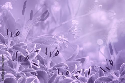 floral-light-violet-beautiful-background-flower-composition-of-purple-flowers-lilies-nature