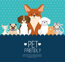 Dogs And Cats Pets Friendly Ve...