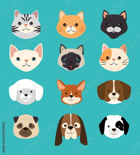 Photo  dogs and cats pets friendly vector illustration design