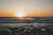 Sun Rise On The Sea With Birds