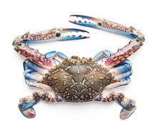 Raw Blue Crab Isolated On Whit...