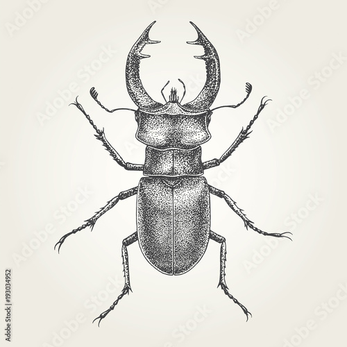 Tela Hand drawn Stag Beetle. Vintage vector illustration