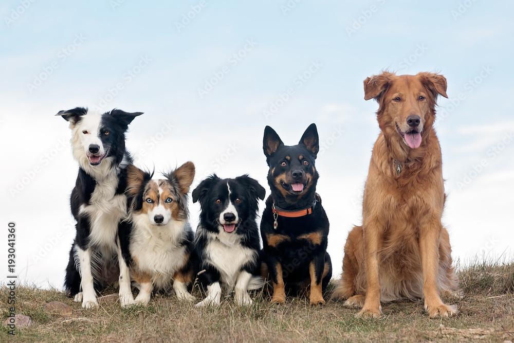 Fototapety, obrazy: Group of dogs