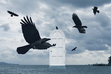 Crows Flying Around The Door O...