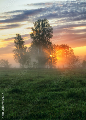 Papiers peints Morning Glory spring morning. a misty dawn in a picturesque meadow. Sun rays