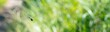 Gefleckte Smaragdlibelle (Somatochlora flavomaculata) im Flug, Achterwasser, Naturschutzgebiet Gnitz, Insel Usedom, Mecklenburg-Vorpommern, Deutschland, Europa