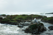 Solitary Sea Gull Perched On C...