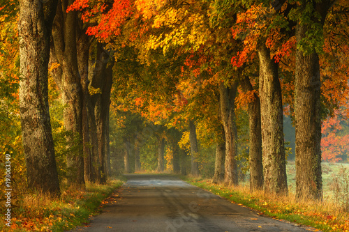 Autumn country road alley / Beautiful old autumnal season trees scenery in north Poland