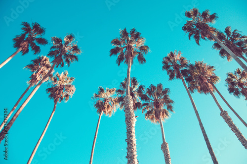 Poster Palmier California high palms on the beach, blue sky background