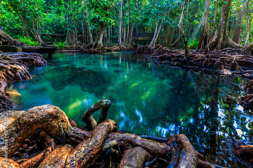 Tha pom mangrove forest, Emerald Pool is unseen pool in mangrove forest at Krabi province, Krabi, Thailand - 193081532
