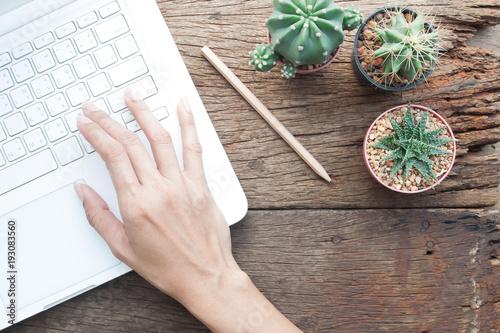 Fototapeta Top view of Cactus gardener's workspace, Online shopping or Marketing concept, woman's hand using laptop obraz na płótnie