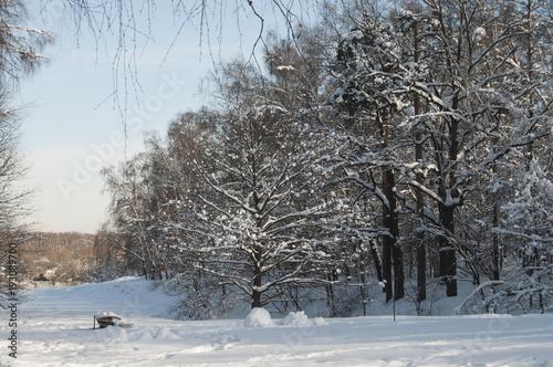 Foto op Canvas Grijs Winter landscape with a pond