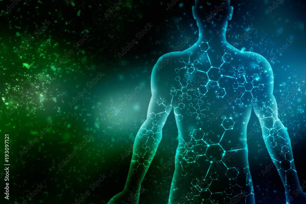 Fototapety, obrazy: 2d illustration Human Male Muscle Body