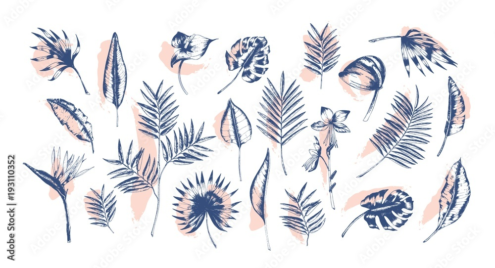Fototapeta Bundle of tropical leaves of various plants hand drawn with contour lines against pink paint traces on background. Set of exotic foliage of different size and shape. Realistic vector illustration.