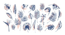 Bundle Of Tropical Leaves Of Various Plants Hand Drawn With Contour Lines Against Pink Paint Traces On Background. Set Of Exotic Foliage Of Different Size And Shape. Realistic Vector Illustration.