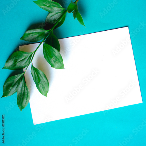 Foto op Canvas Bloemen Green branches with leaves on blue background. Botanical minimalistic mock up with copy space on sheet of paper.