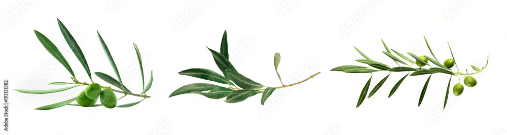 Fototapety, obrazy: Set of green olive branch photos, isolated on white