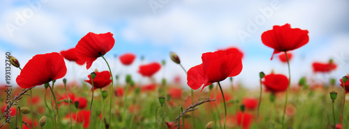 Montage in der Fensternische Mohn Poppies on sky background.