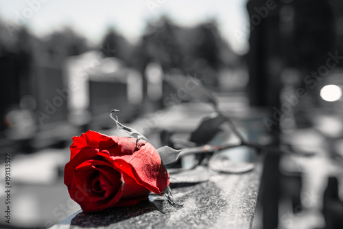 Photo Rose in a cemetery with headstone