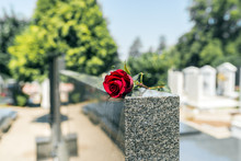 Rose In A Cemetery With Headst...