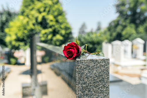 Rose in a cemetery with headstone Canvas Print