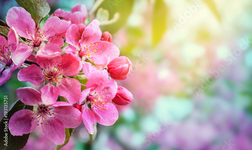 Obraz Abstract blurred background of spring  blossoms tree, selective focus.  - fototapety do salonu