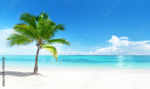 Spoed Foto op Canvas Strand Palm on the beach