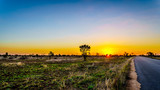 Fototapeta Sawanna - Sunrise over the savanna and grass fields in central Kruger National Park in South Africa