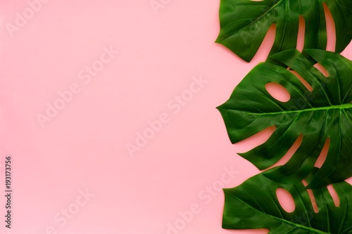Tropical palm leaves on a light pink background. Side border. Minimal nature. Flat lay. Top view.