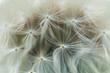 Leinwanddruck Bild - Flowers