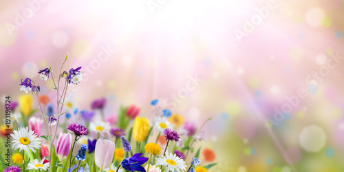 Recess Fitting Floral Nature background with wild flowers