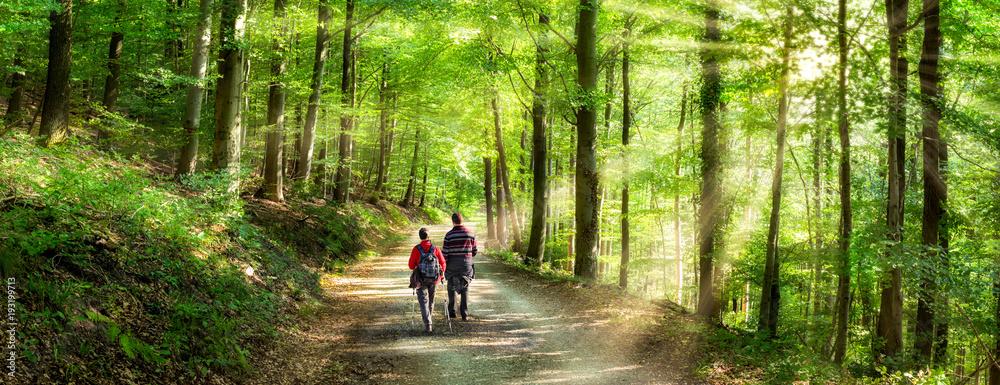 Fototapety, obrazy: Aktivurlaub im Frühling bei einer Wanderung im Wald