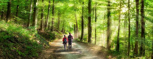 Aktivurlaub im Frühling bei einer Wanderung im Wald