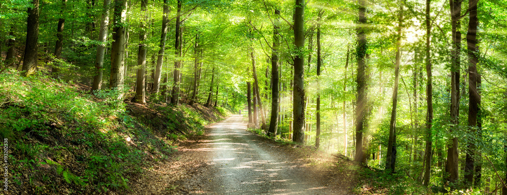 Fototapety, obrazy: Grünes Wald Panorama im Sonnenlicht