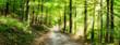 Leinwandbild Motiv Grünes Wald Panorama im Sonnenlicht