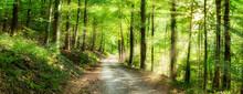Grünes Wald Panorama Im Sonne...