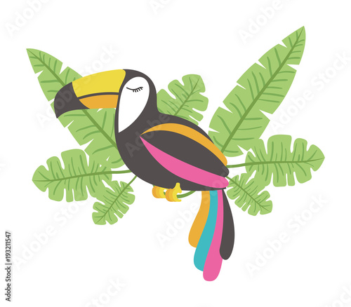 toucan exotic bird with leafs palm vector illustration design Canvas Print