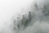 Świerki i mgła w Cieśninie Zagrożenia; Alaska - 193218377