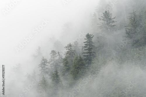 spruce-trees-fog-in-peril-strait-alaska