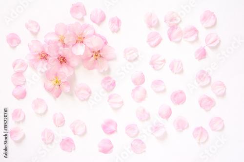 Deurstickers Kersenbloesem 桜の花 白背景