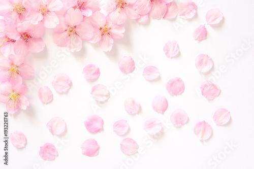 Foto op Plexiglas Kersen 桜の花 白背景