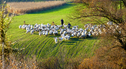Fotomural Autumn sheep flock on their way