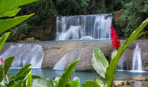 Küchenrückwand aus Glas mit Foto Wasserfalle Scenic waterfalls and lrd flower in Jamaica