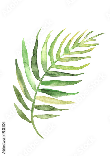 Watercolor Drawing Of A Leaf Of A Palm Tree Green Tropical Palm Leaf Hand Drawn Illustratio Drawing On White Isolated Background Watercolor Logo Element Buy This Stock Illustration And Explore Similar