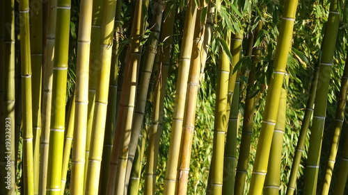 In de dag Bamboo Bamboo grove, bamboo forest natural green background