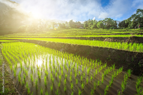 Fotobehang Rijstvelden green terraced rice field with fog in the morning at Chiangmai Thailand