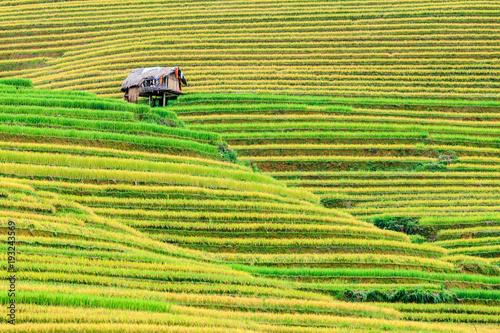 Poster Rijstvelden Terrace rice field at Mu Cang Jai, Vietnam.